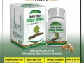 giloy-imun-capsules-small-0