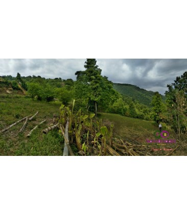 13 Ropani land on sale at Dahachowk