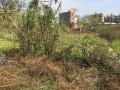 5-anna-land-on-sale-at-satungal-small-0
