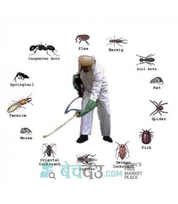 Pest Control Service in Kathmandu, Bhaktapur & Lalitpur.
